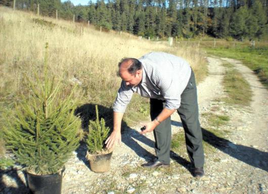 Горският шеф Пламен Поюков всеки ден е в разсадника, казва, че много скоро към пазара тръгват хиляди живи елхички